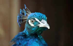 sferya-bird
