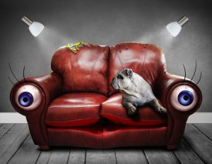 sofa-sferya-eyes-dog